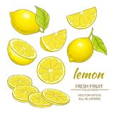 Lemon vector set. Lemon fruit vector set on white background royalty free illustration