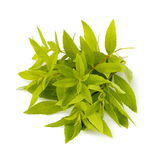 Lemon verbena Stock Photos