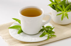 Lemon verbena herbal tea Stock Image