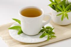 Lemon verbena herbal tea. In a cup. Aloysia citriodora.  Naturopathy. White Background. Focus on foreground Stock Image