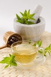 Lemon verbena herbal tea. In a glass cup. Aloysia citriodora.  Naturopathy. White Background. Focus on foreground Royalty Free Stock Image