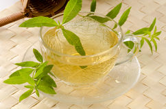 Lemon verbena herbal tea. In a glass cup. Aloysia citriodora.  Naturopathy. White Background. Focus on foreground Royalty Free Stock Photography