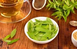 Lemon verbena leaves and tea on table. Lemon verbena leaves on white bowl and verbena tea on wooden table. Aloysia citrodora. Angle view Stock Photo