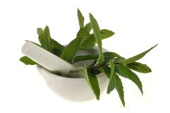 Lemon verbena in a mortar with a pestle royalty free stock image