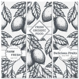 Lemon vertical banner collection. Lemons hand drawn in ink illustration. Stock Image