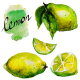 Lemon watercolor Stock Photography