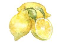 The lemon watercolor  painting watercolor  Stock Photo