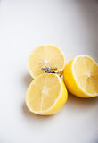 Lemon with wedding rings Royalty Free Stock Images