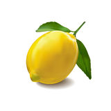 Lemon on the white background. Realistick lemon on the white background with drop shadow Royalty Free Stock Photo