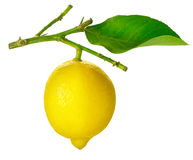 Lemon on a White stock images