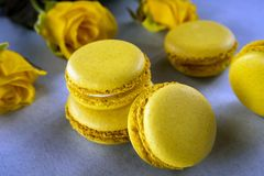Lemon yellow macaroons on a background of yellow roses. Delicious French dessert. stock image