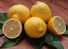 Lemon yellows Stock Images