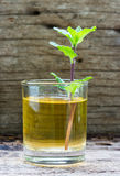 Lemonade with mint on a dark wood Stock Photo