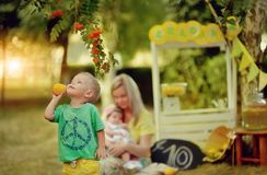 Lemonade picnic stock images