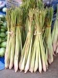 Lemongras Stockbild