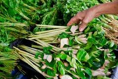 Lemongras- und kafferkalkblatt im Markt Lizenzfreies Stockbild