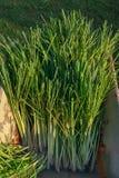 Lemongras wird vom Bauernhof geerntet stockbilder