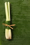 lemongrass Obrazy Royalty Free
