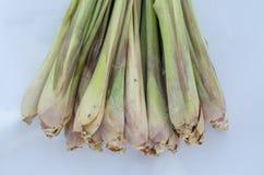 lemongrass Arkivfoto