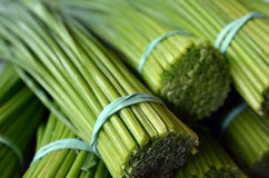 Lemongrass bunch royalty free stock photo