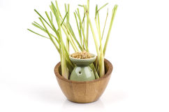 Lemongrass (Cymbopogon citratus (DC.) Stapf). Stock Images