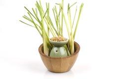 Lemongrass (Cymbopogon citratus (DC.) Stapf). Lemongrass plants with medicinal properties Stock Images