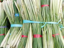 Lemongrass Royalty Free Stock Images