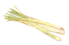 Lemongrass isolated Stock Image