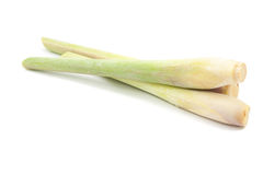 Lemongrass isolated Stock Images