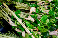 Lemongrass and kaffer lime leaf in market. Lemongrass and kaffer lime leaf in fresh market , Asia , Thailand stock image