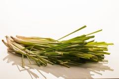 Lemongrass na białym tle Zdjęcie Stock