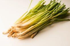 Lemongrass na białym tle Zdjęcie Royalty Free
