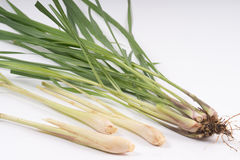 Lemongrass tree. On white background Stock Photos