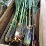 Lemongrass wiązki dla sprzedaży przy rolnicy wprowadzać na rynek Obraz Royalty Free