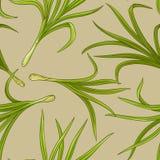 Lemongrassvektormodell stock illustrationer