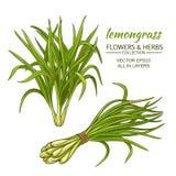 Lemongrassvektoruppsättning stock illustrationer