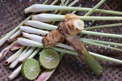 Lemongress, известка и galanga Стоковые Фото