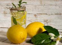 Lemoniada z mennicą dekorował z kwitnie drzewem Zdjęcia Stock