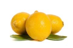 Lemons. Three ripe lemons isolated on white background Royalty Free Stock Photography