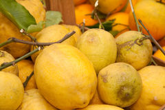 Lemons. Close-up of lemons for sale outside a grocery shop Royalty Free Stock Image