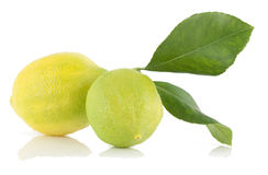 Lemons. Two lemons with green leaves on a white background with reflection Royalty Free Stock Images