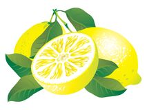 Lemons. Raster version of vector image of lemons Stock Photography