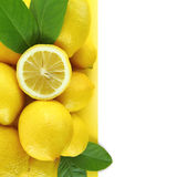 Lemons banner Royalty Free Stock Images