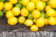 Lemons in basket Royalty Free Stock Images