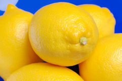 Lemons in a blue bowl. Royalty Free Stock Image