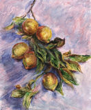 Lemons on a Branch. Inspired by Claude Monet painting Lemons on a Branch, watercolor interpretation Stock Photography