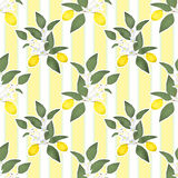 Lemons citrus seamless pattern lemony leaves on striped Stock Photos