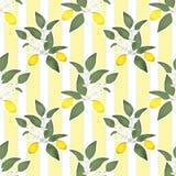 Lemons citrus seamless pattern lemony leaves on striped Stock Photos