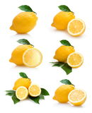 Lemons collection Stock Photo