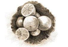 Lemons drawn. Hand-drawn lemons vintage background Stock Image